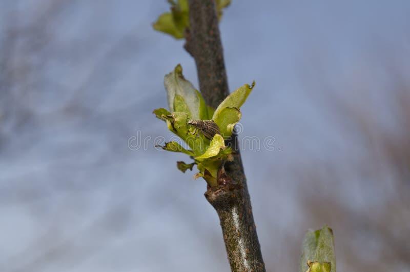 Οφθαλμοί σε ένα δέντρο στοκ εικόνες