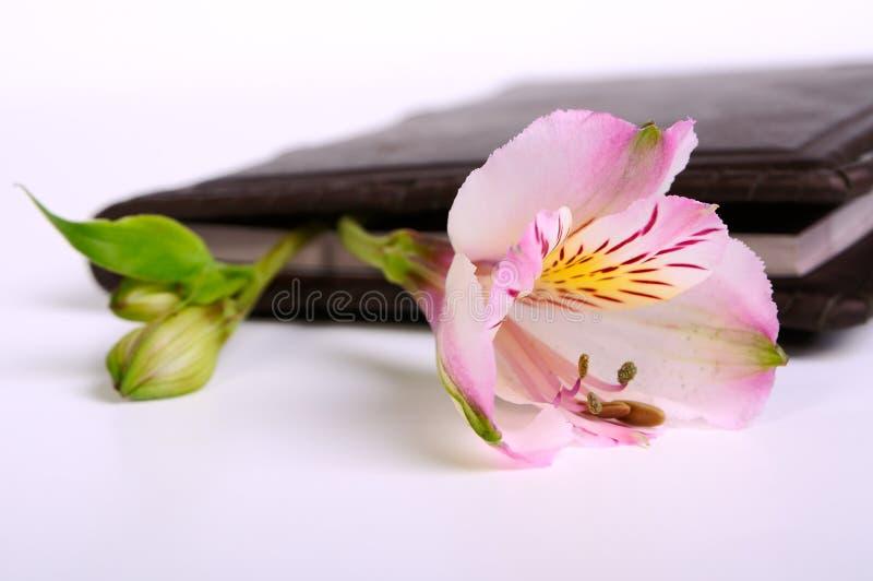 Οφθαλμός λουλουδιών σε ένα βιβλίο στοκ φωτογραφία με δικαίωμα ελεύθερης χρήσης