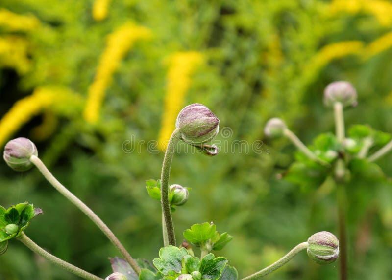 Οφθαλμός λουλουδιών στοκ εικόνες