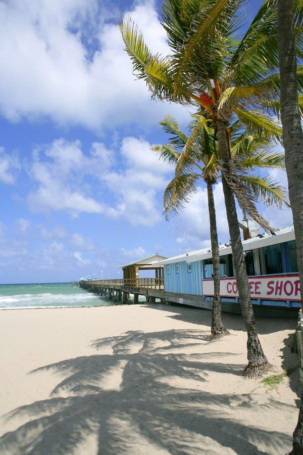 Download οχυρό καφέδων παραλιών Lauderdale τ&r Στοκ Εικόνες - εικόνα από φοίνικας, οχυρό: 13179994