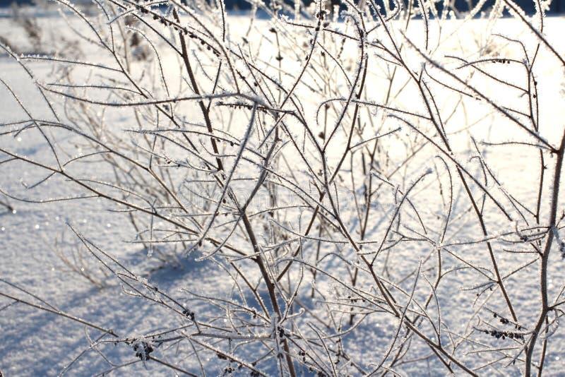 Ο άσπρος παγετός σπινθηρίσματος του πάγου εξωραΐζει τους κλάδους της ξηράς χλόης το χειμώνα μια σαφή παγωμένη ημέρα στοκ εικόνες