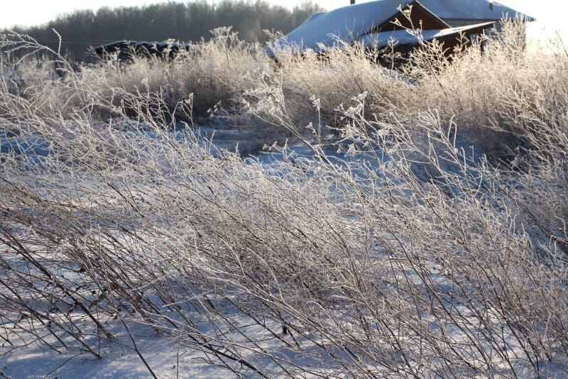 Ο άσπρος παγετός σπινθηρίσματος του πάγου εξωραΐζει τους κλάδους της ξηράς χλόης το χειμώνα μια σαφή παγωμένη ημέρα στοκ εικόνα με δικαίωμα ελεύθερης χρήσης