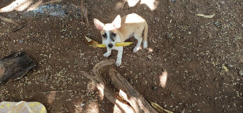 Ο άτακτος σκύλος στοκ φωτογραφία με δικαίωμα ελεύθερης χρήσης