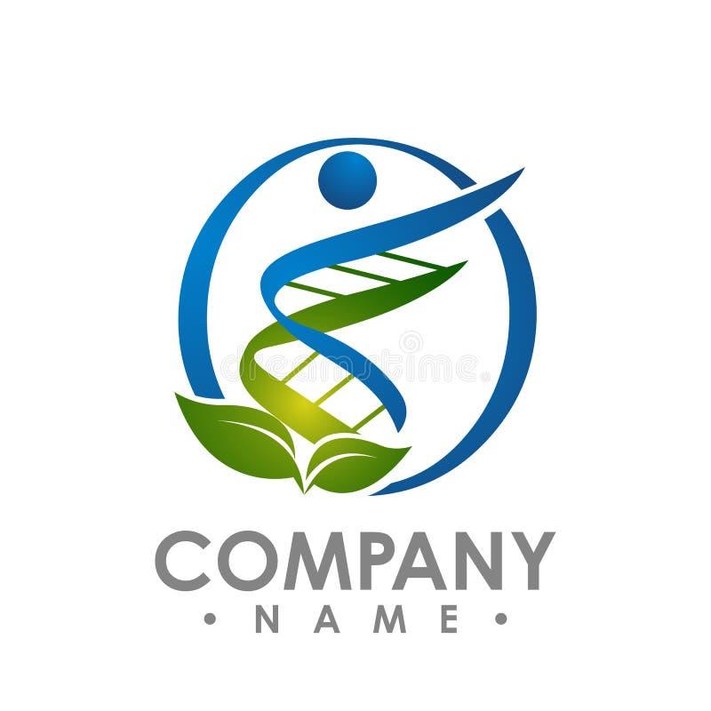 Ο έλικας DNA Eco της μορφής ανθρώπων με πράσινο βγάζει φύλλα το διανυσματικό λογότυπο desig απεικόνιση αποθεμάτων