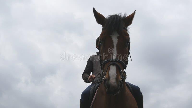 Οδήγηση πλατών αλόγου νεαρών άνδρων υπαίθρια Αρσενικό jockey που οδηγά ένα άλογο στη σκοτεινή νεφελώδη ημέρα Όμορφος βροχερός ουρ στοκ φωτογραφίες με δικαίωμα ελεύθερης χρήσης