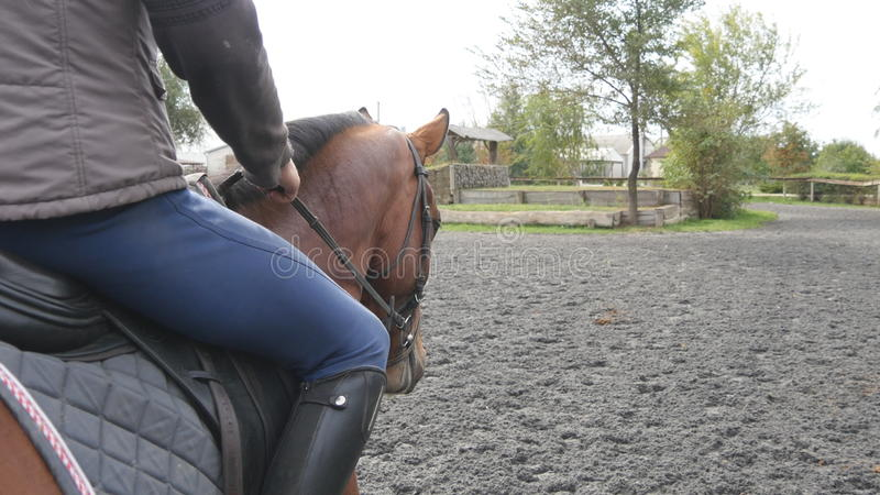 Οδήγηση πλατών αλόγου νεαρών άνδρων υπαίθρια Αρσενικό jockey στο άλογο που περπατά στο manege στο αγρόκτημα τη σκοτεινή νεφελώδη  στοκ εικόνες με δικαίωμα ελεύθερης χρήσης