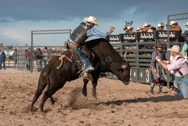 Οδήγηση του Bull ροντέο κάουμποϋ στοκ φωτογραφία με δικαίωμα ελεύθερης χρήσης