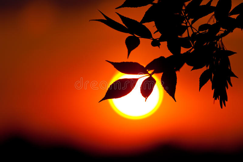 ο ήλιος ανασκόπησης brunch