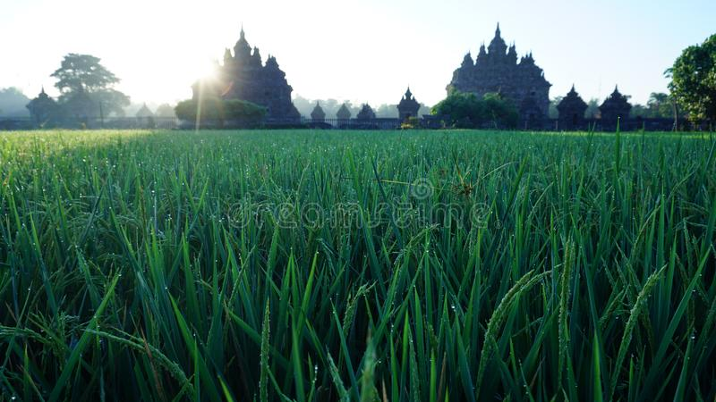 Ο ήλιος αυξάνεται αρχές του καλοκαιριού με το πρώτο πλάνο ενός ναού στοκ φωτογραφία με δικαίωμα ελεύθερης χρήσης