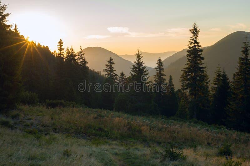 Ο ήλιος κάθεται πίσω από τα τεράστια κομψά δέντρα σε ένα αλπικό λιβάδι στοκ εικόνα