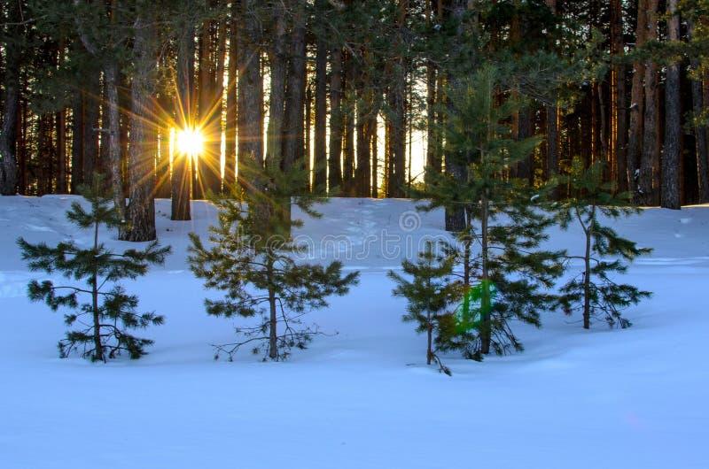 Ο ήλιος λάμπει μέσω του δάσους στοκ εικόνες