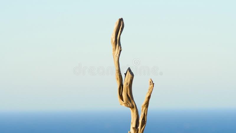 Ο ήλιος λεύκανε τους ξηρούς ξύλινους κλάδους στοκ φωτογραφία