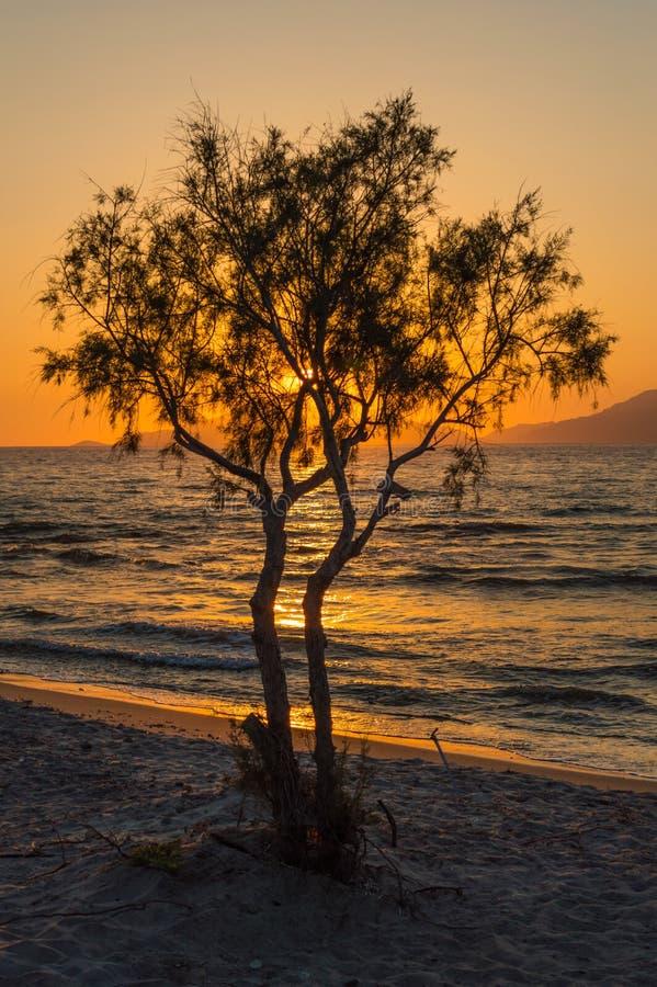 Ο ήλιος που θέτει πίσω από ένα απομονωμένο δέντρο και τα βουνά σε μια άσπρη παραλία άμμου στοκ φωτογραφία με δικαίωμα ελεύθερης χρήσης