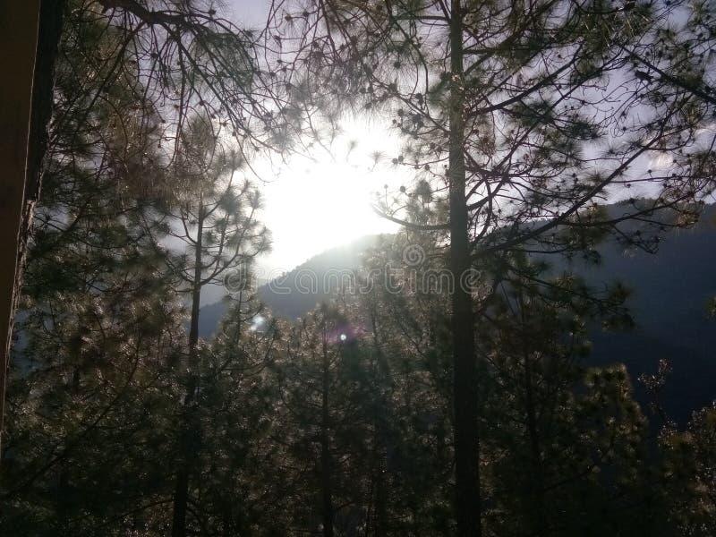 Ο ήλιος προκύπτει στο βουνό μεταξύ του δέντρου στοκ φωτογραφία