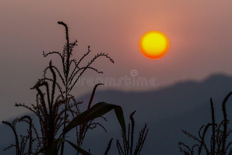 Ο ήλιος πρωινού ήταν οποιαδήποτε αρχή στοκ φωτογραφίες με δικαίωμα ελεύθερης χρήσης