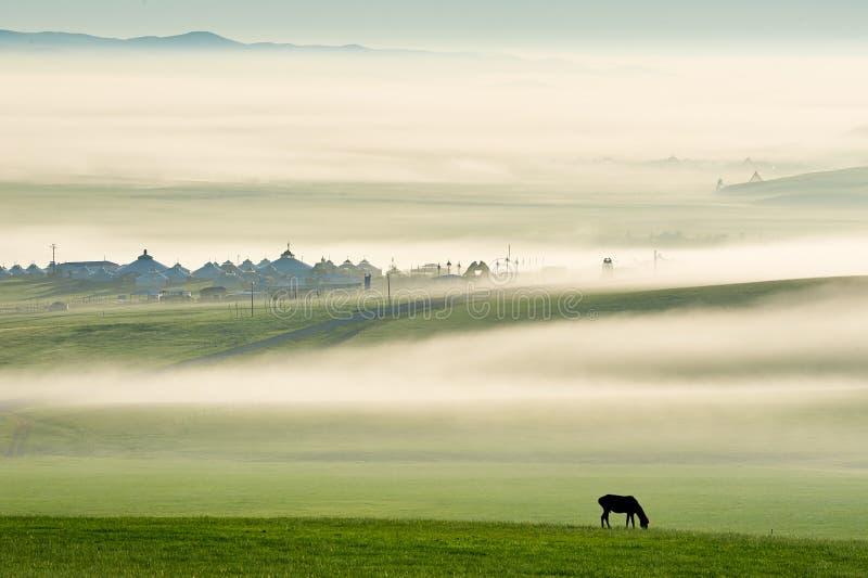 Ο αέρας και το άλογο πρωινού στο πράσινο λιβάδι στοκ εικόνα