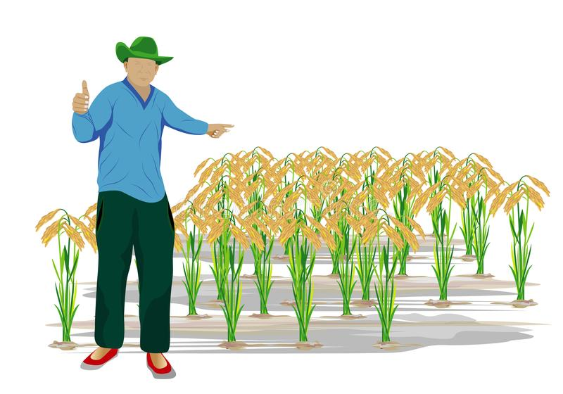 Ο αγρότης στον τομέα ορυζώνα απεικόνιση αποθεμάτων