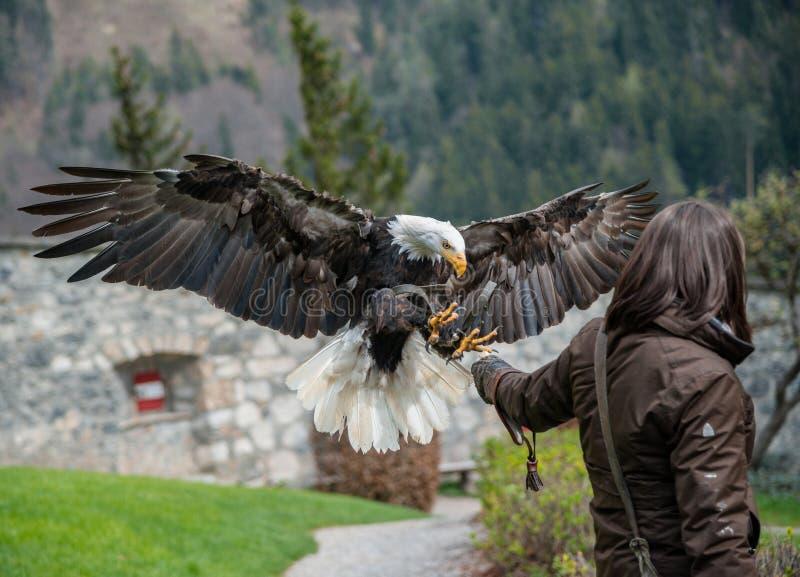 Ο αετός παρουσιάζει στο Castle Hohenwerfen στα αυστριακά όρη στοκ φωτογραφίες