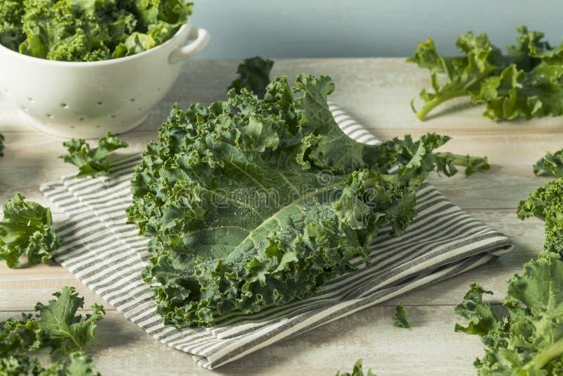 Ο ακατέργαστος πράσινος οργανικός σγουρός Kale στοκ εικόνα