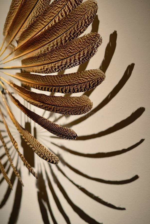 Ο ανεμιστήρας φιαγμένος από ζωηρόχρωμα φτερά στοκ φωτογραφία με δικαίωμα ελεύθερης χρήσης