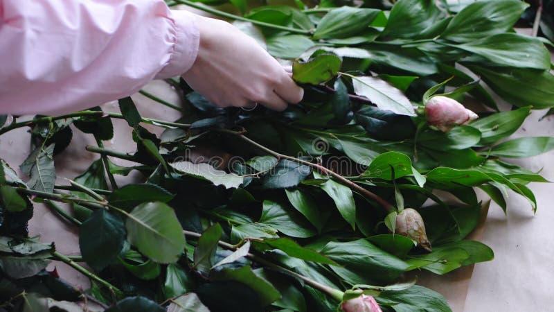 Ο ανθοκόμος κανονίζει τα τριαντάφυλλα για τα πράσινα για να δημιουργήσει μια ανθοδέσμη σε ένα ανθοπωλείο Κλείστε επάνω την όψη στοκ φωτογραφία