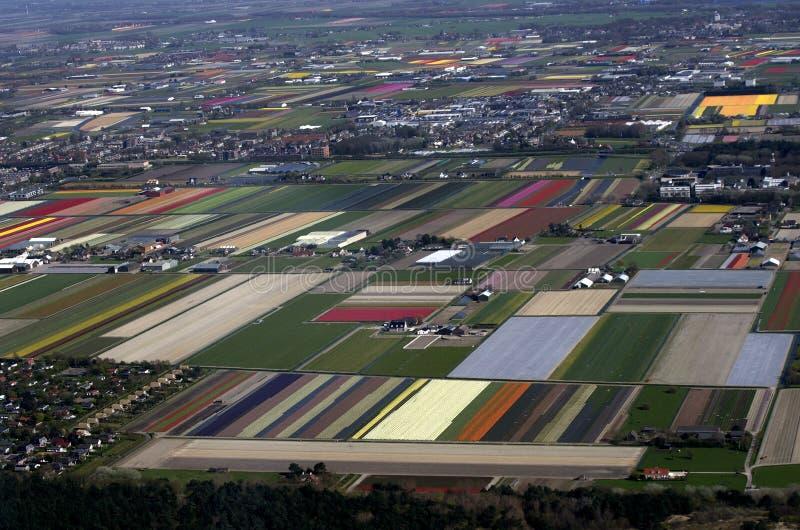 Ολλανδικοί τομείς λουλουδιών και τουλιπών την άνοιξη στοκ φωτογραφίες