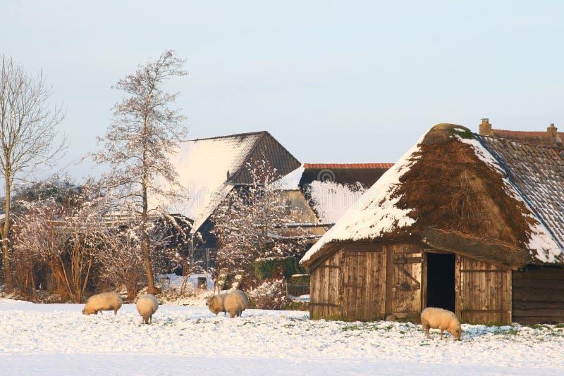 Ολλανδικό τοπίο πόλντερ με ένα sheepfold το χειμώνα στοκ εικόνες
