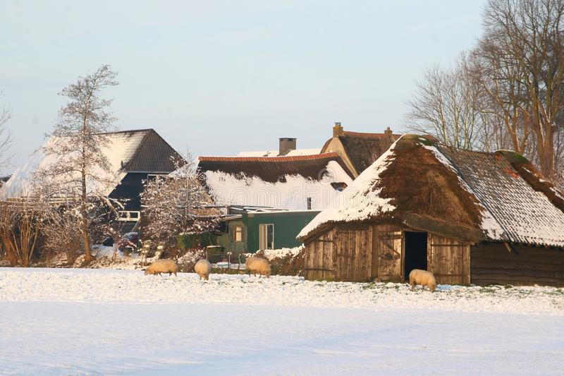 Ολλανδικό τοπίο πόλντερ με ένα sheepfold στοκ φωτογραφίες