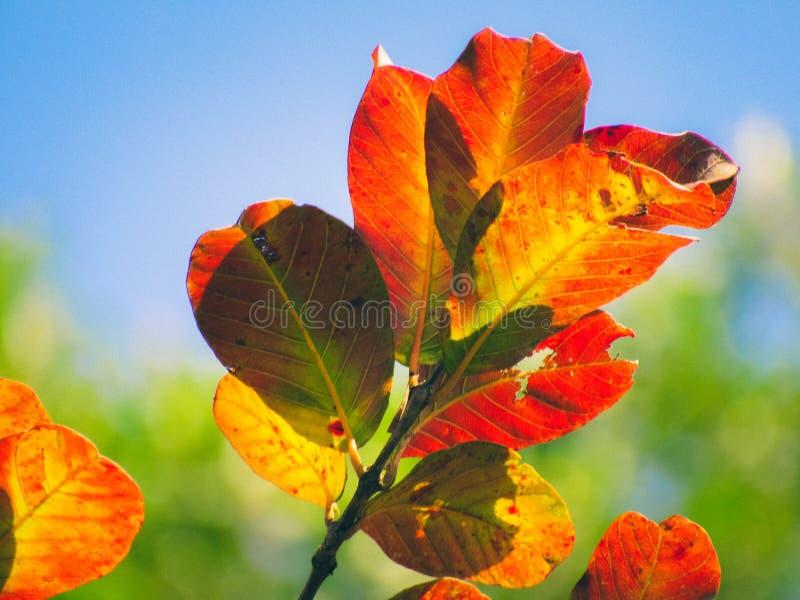 Ο απομονωμένος κλάδος πορτοκαλιού πράσινου κίτρινου βγάζει φύλλα σε ένα υπόβαθρο μπλε ουρανού στοκ φωτογραφίες