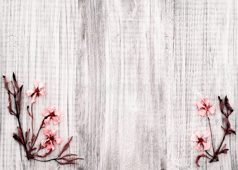 Ο αρκετά ξηρός βράχος αυξήθηκε λουλούδια στο αγροτικό άσπρο ξύλινο υπόβαθρο με το δωμάτιο ή το διάστημα για το κείμενο, το αντίγρα στοκ φωτογραφία με δικαίωμα ελεύθερης χρήσης