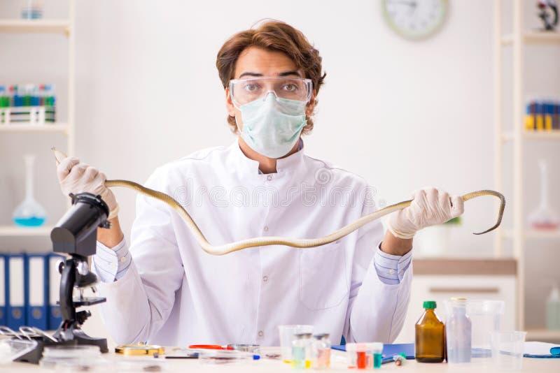 Ο αρσενικός επιστήμονας που εξάγει το δηλητήριο από το φίδι για τη σύνθεση φαρμάκων στοκ φωτογραφία με δικαίωμα ελεύθερης χρήσης