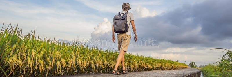 Ο αρσενικός τουρίστας με ένα σακίδιο πλάτης πηγαίνει στο ΕΜΒΛΗΜΑ τομέων ρυζιού, ΜΑΚΡΟΧΡΟΝΙΟ ΣΧΗΜΑ στοκ εικόνες