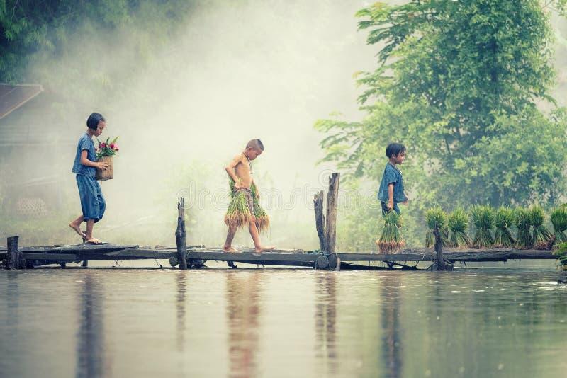 Ο ασιατικός αγρότης παιδιών στο ρύζι διασχίζει την ξύλινη γέφυρα πριν από αυξημένη στον τομέα ορυζώνα στοκ φωτογραφία με δικαίωμα ελεύθερης χρήσης