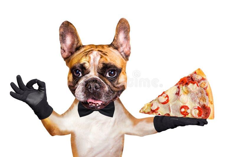 Ο αστείος σκυλιών σερβιτόρος μπουλντόγκ πιπεροριζών γαλλικός σε έναν μαύρο δεσμό τόξων κρατά μια φέτα της ιταλικής πίτσας με το τ στοκ φωτογραφία