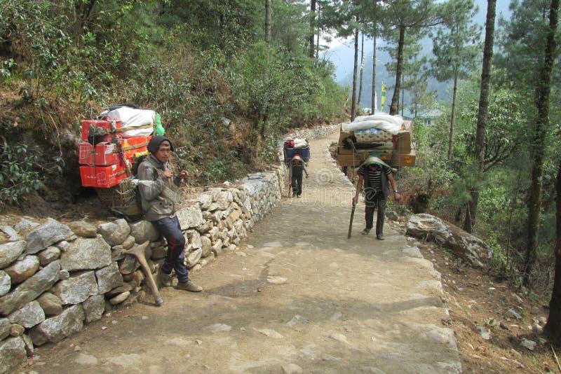 Ο αχθοφόρος Sherpa φέρνει το καλάθι στην πορεία οδοιπορίας του Νεπάλ στοκ εικόνα