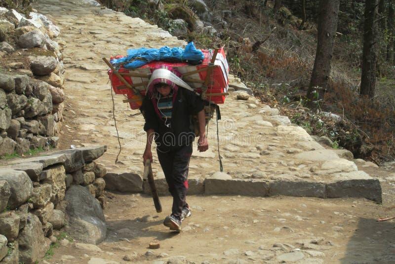 Ο αχθοφόρος Sherpa φέρνει το καλάθι στην πορεία οδοιπορίας του Νεπάλ στοκ εικόνες
