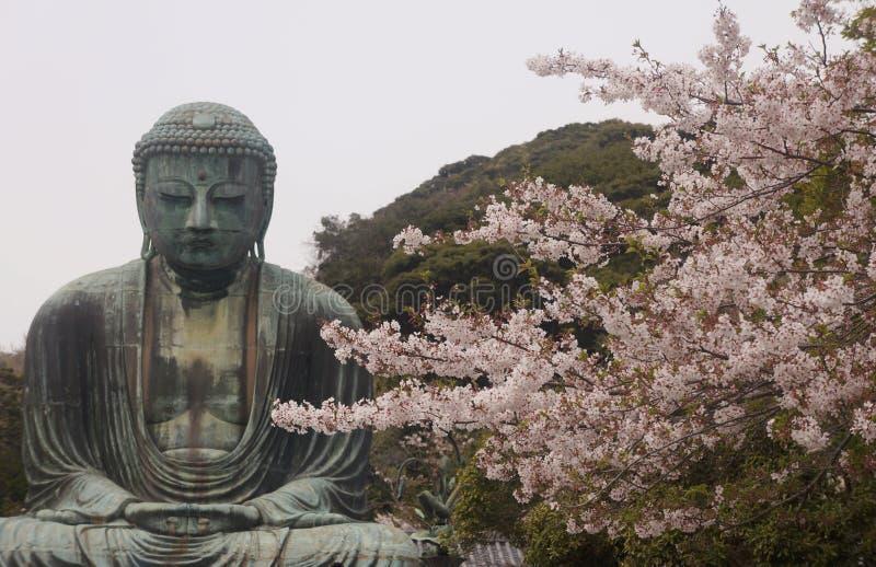 Ο Βούδας Kamakura με το sakura, Ιαπωνία στοκ εικόνες