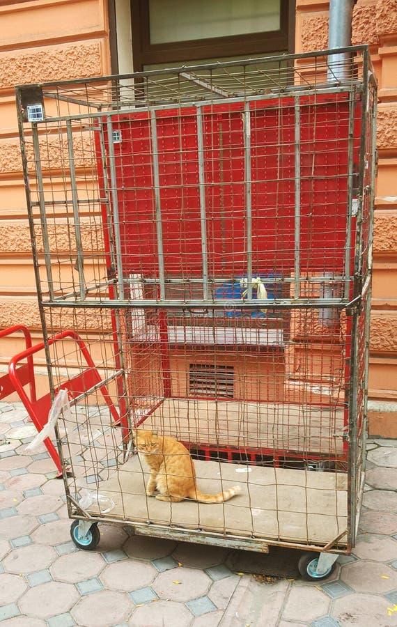 Ο γάτα-φυλακισμένος στοκ εικόνες