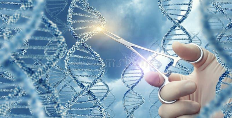 Ο γιατρός άγγιξε τον ιατρικό σφιγκτήρα ένα DNA στοκ εικόνα