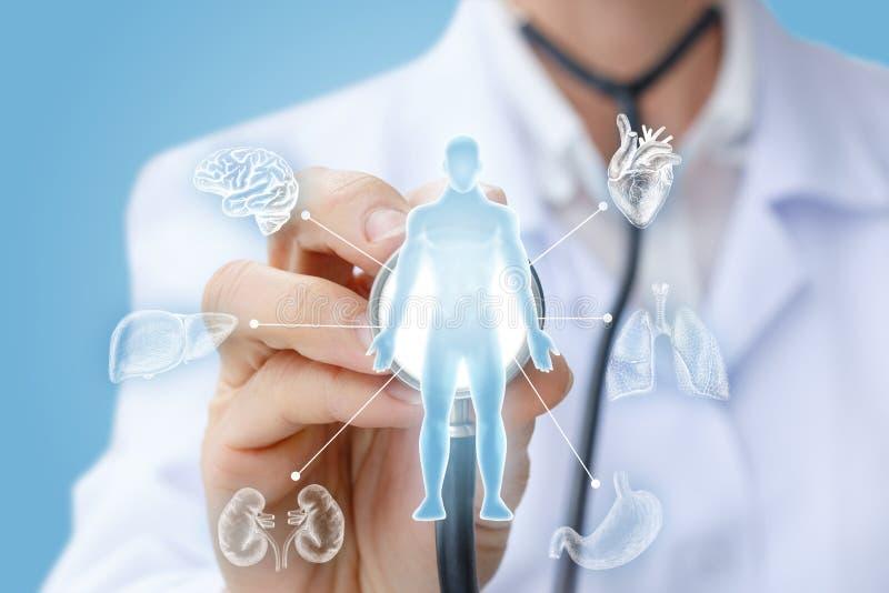 Ο γιατρός εξετάζει τα εσωτερικά όργανα στοκ εικόνα με δικαίωμα ελεύθερης χρήσης