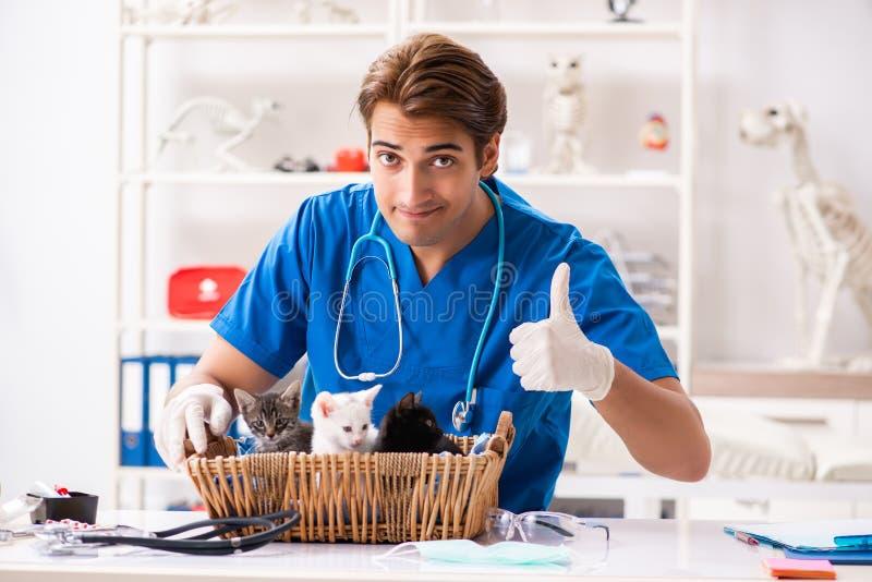 Ο γιατρός κτηνιάτρων που εξετάζει τα γατάκια στο ζωικό νοσοκομείο στοκ φωτογραφία