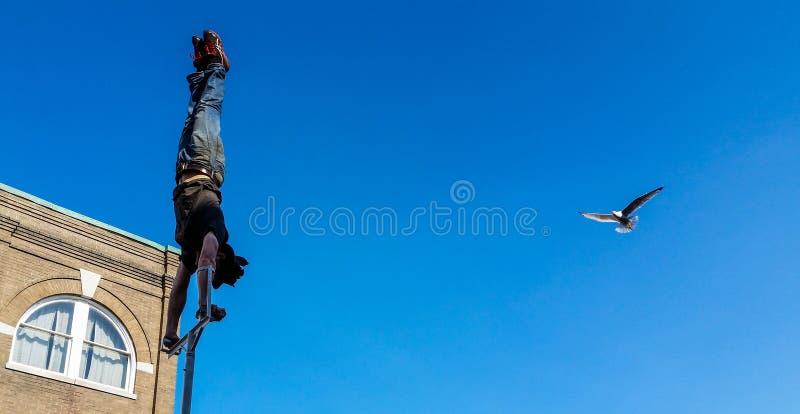 Ο γλάρος πετά στα ύψη μέσα για να ελέγξει έξω τον εκτελεστή οδών που κάνει τη στάση χεριών στοκ εικόνες