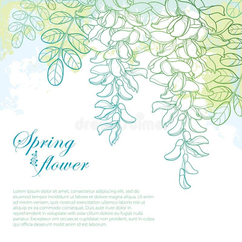 Ο διανυσματικός κλάδος της περίληψης που η άσπρη ψεύτικη ακακία ή η μαύρο ακρίδα ή Robinia ανθίζουν, βλαστάνει και φύλλα στην κρη διανυσματική απεικόνιση