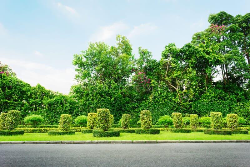 Ο δρόμος ασφάλτου πηγαίνει greenness στην ημέρα δασών και μπλε ουρανού στοκ εικόνα
