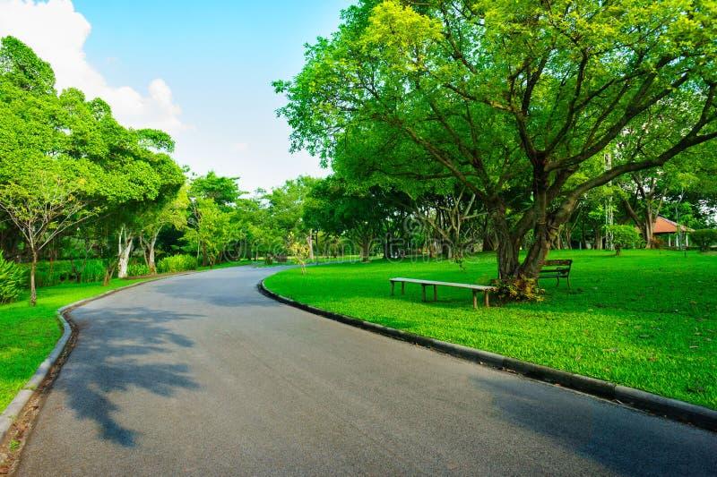 Ο δρόμος ασφάλτου πηγαίνει greenness στο δάσος και το μπλε ουρανό στοκ φωτογραφία