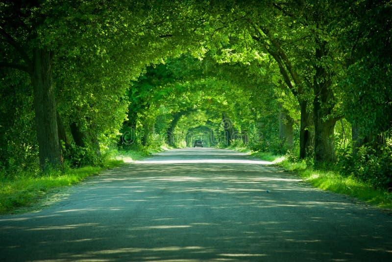 Ο δρόμος σε μια πράσινη αψίδα των δέντρων στοκ εικόνα με δικαίωμα ελεύθερης χρήσης