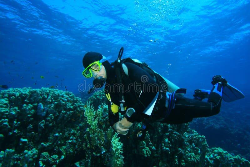 ο δύτης κοραλλιών εξερε& στοκ εικόνα με δικαίωμα ελεύθερης χρήσης
