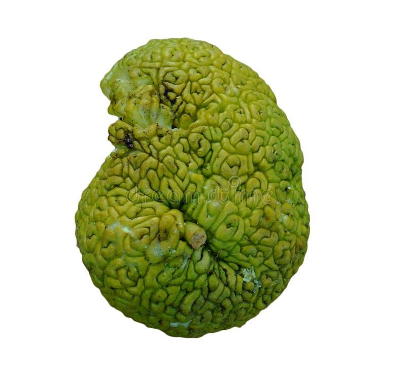 Ο εγκέφαλος διαμόρφωσε τα πράσινα φρούτα, pomifera Maclura (γνωστό ως πορτοκάλια Osage) στοκ φωτογραφία με δικαίωμα ελεύθερης χρήσης