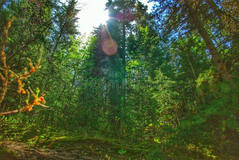 Ο ειρηνικός Forrest στοκ εικόνα