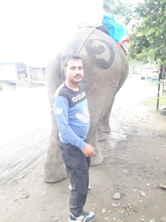 Ο ελέφαντας στην Ινδία που είναι πολύ ήπιος στοκ φωτογραφία με δικαίωμα ελεύθερης χρήσης